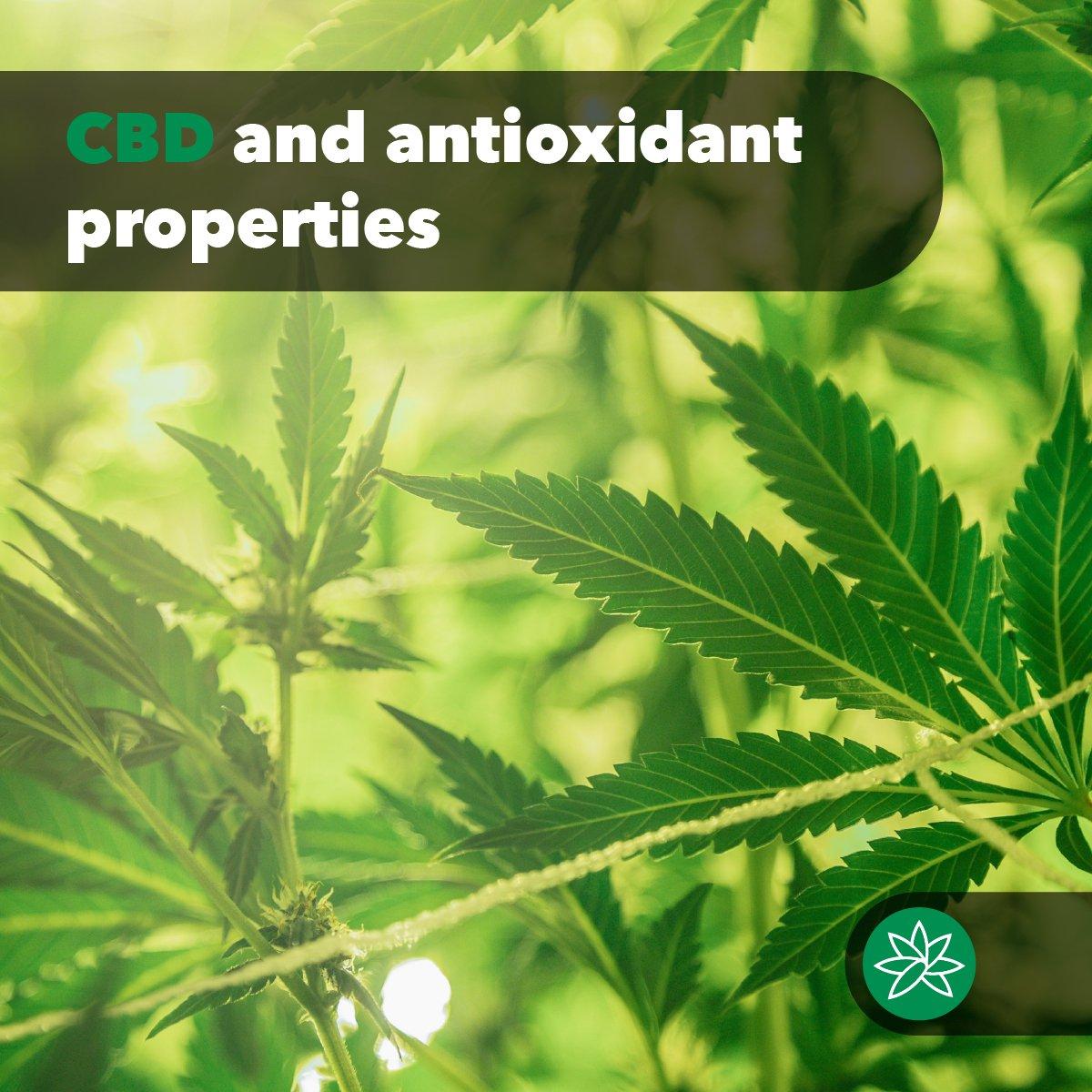 CBD and antioxidant properties