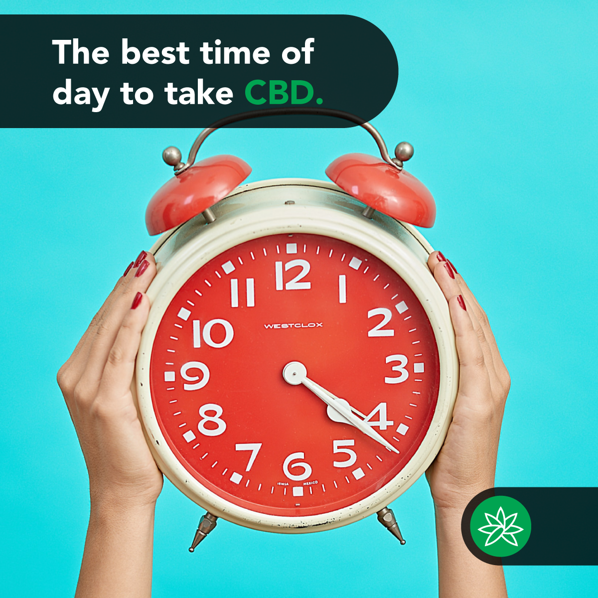 The best time of day to take CBD